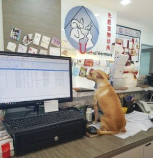 Veterinary Receptionists Wanted United Veterinary Clinic